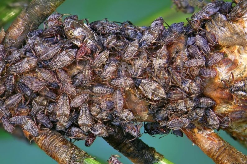Bees collect the sweet honeydew on trees, from which forest honey is then extracted