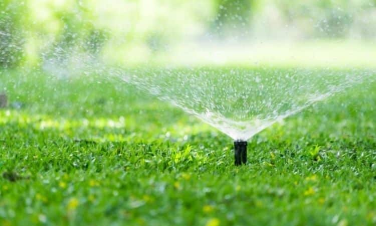 For the lawn to stay green, it needs sufficient irrigation