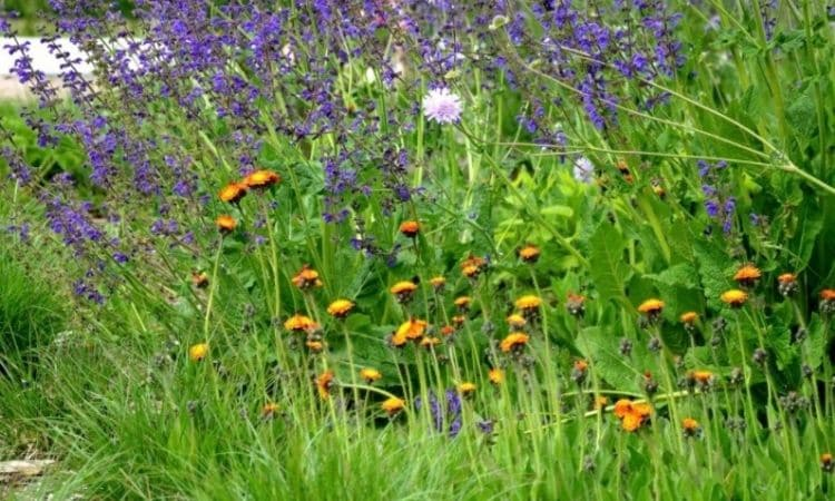 Higher and lower perennials complement each other in a well thought-out shrub bed