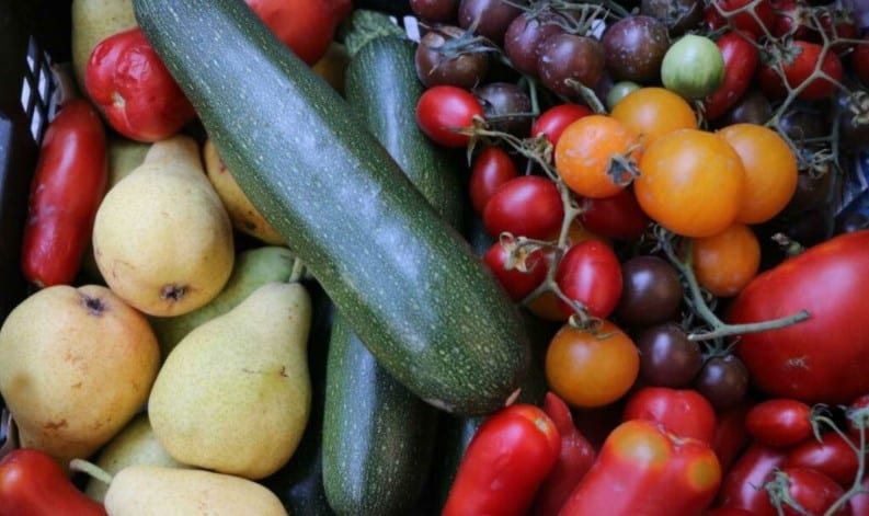 In August you can harvest numerous types of fruit and vegetables