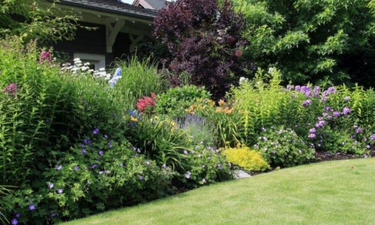 In the background of perennial beds, even large shrubs and bushes can be inserted decoratively
