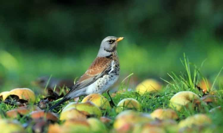 Let seed stands and perennials stand quietly in autumn - the animal world is happy