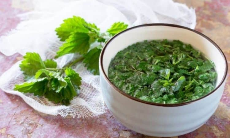 Nettle broth is a natural way to drive away aphids