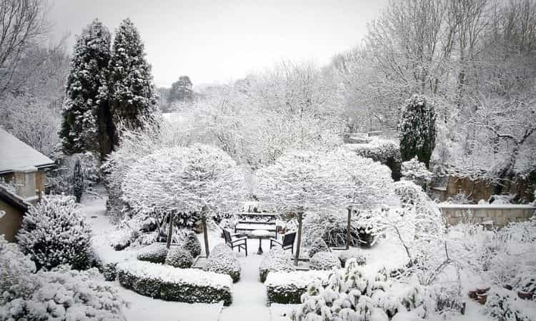 garden in december