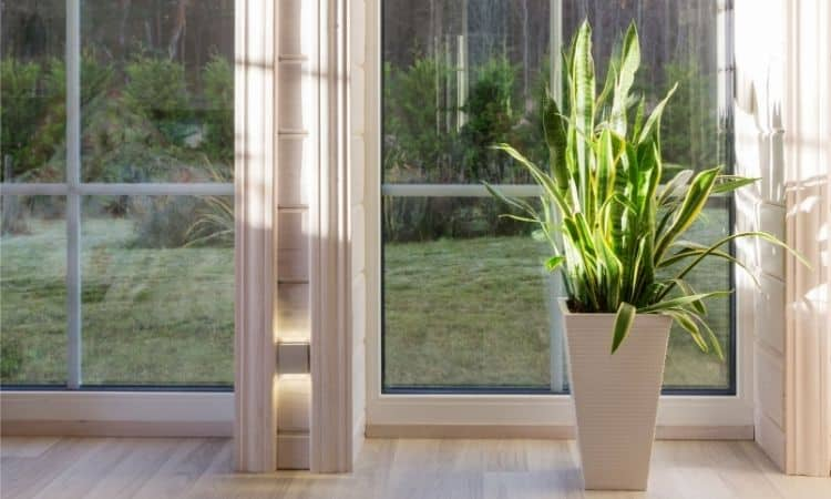 interior with big window,and snake plant in the pot