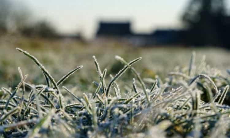 lawn frozen