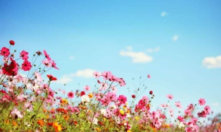 Beautiful Summer Flowers For The Garden