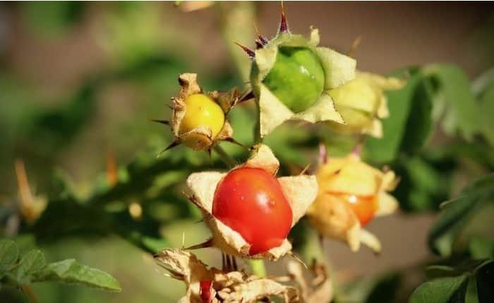 tomato lichi fruits