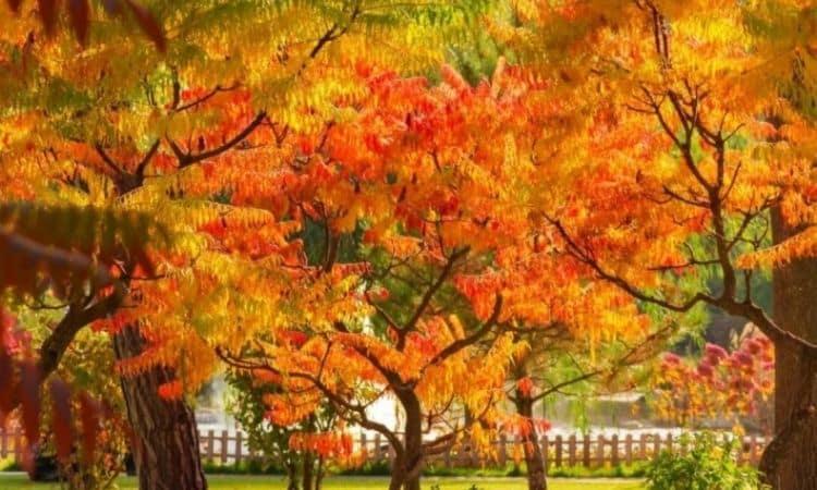 vinegar tree