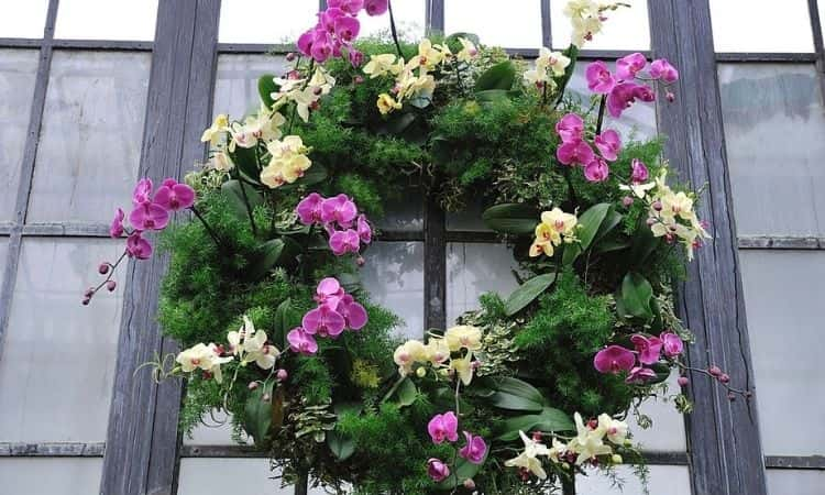 A Christmas wreath of orchids
