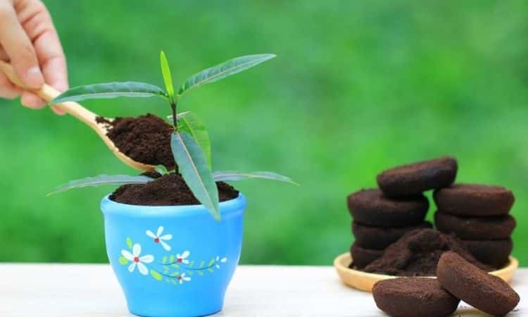 Coffee grounds pot plant