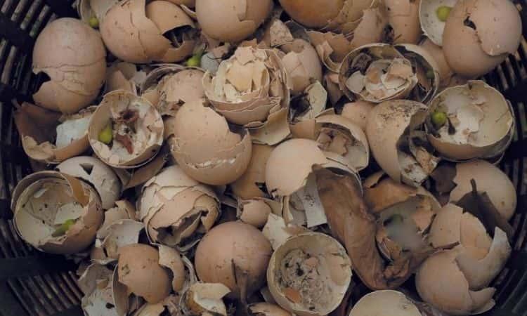 Eggshells-in-a-basket