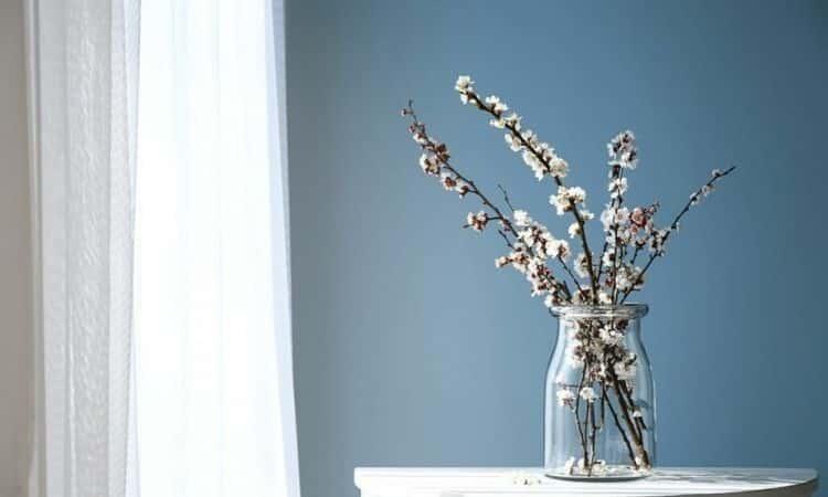 Saint Barbara branches-blossoms