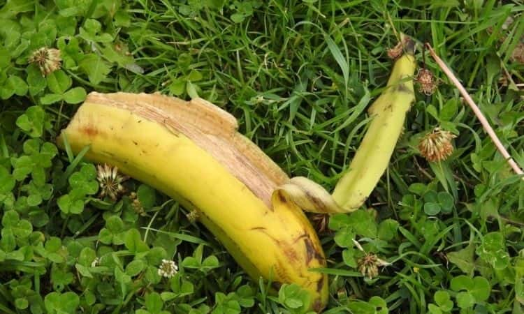banana peals and banana on the green herb