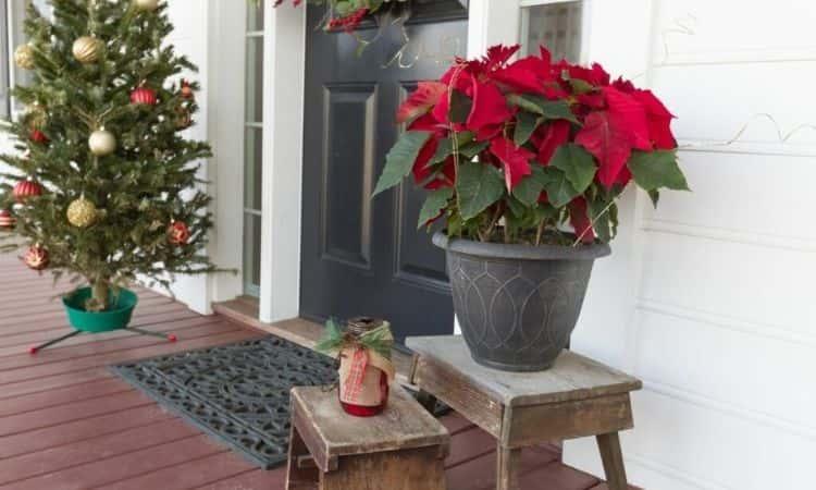 christmas plants decoration