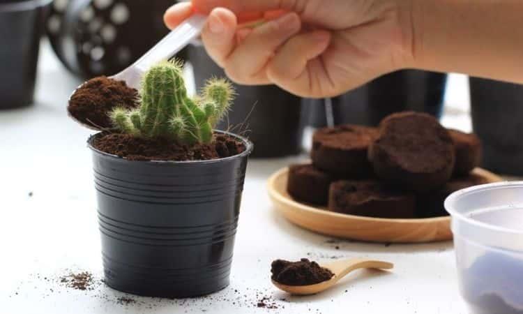 cofeeground-cactus-fertilize