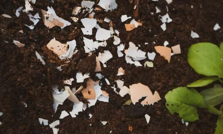 eggshels on the soil