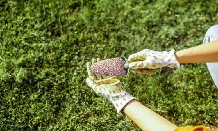 lawn fertilizer-dog poisonous
