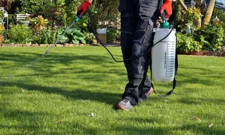 man spray fertilize in lawn