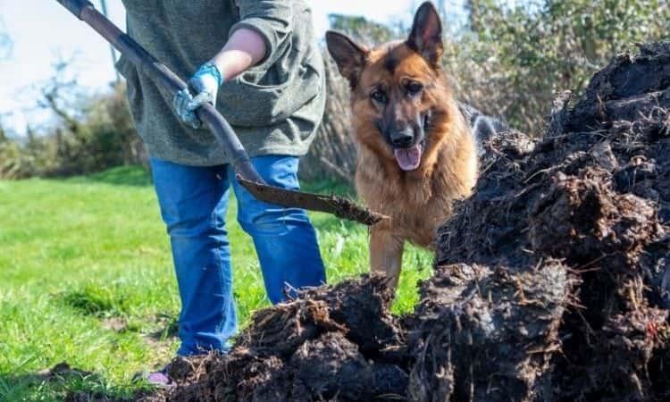 woman fertilize soil near her dog