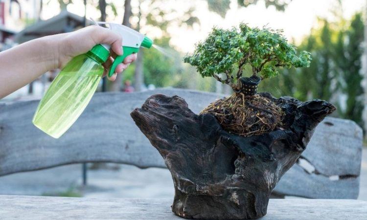 bonsai-spray