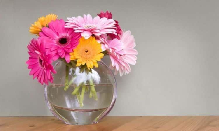 Gerbera-in-Vase