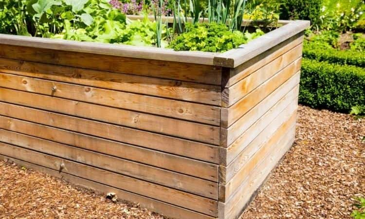 Raised bed of wood in the garden