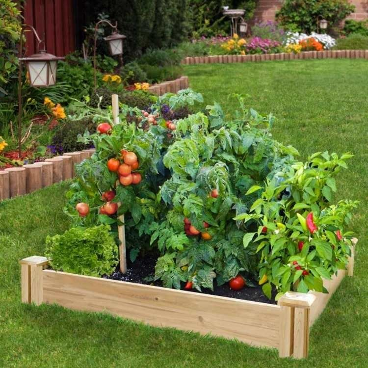 care-and-growing-of-vegetables-like-peppers-and-tomatoes-in-the-high-bed