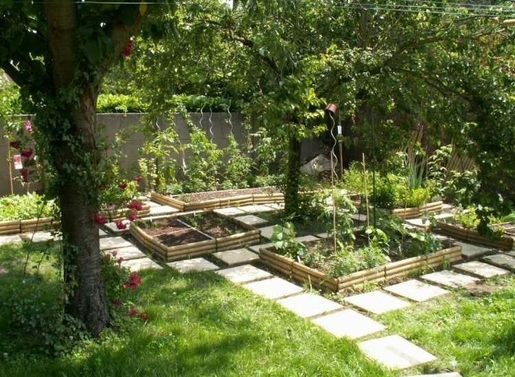 grow-tomatoes-in-a-top-bed-and-with-a-garden-path-between-it