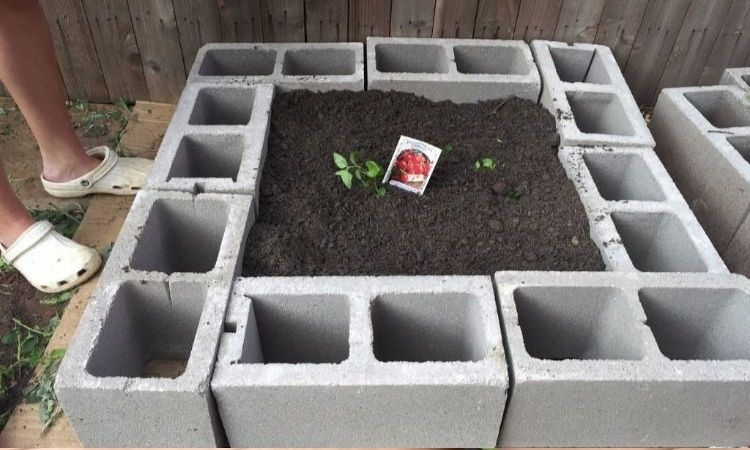 raised-bed-for-tomatoes-build-it-yourself-with-concrete-bricks-and-mother-soil-seeds-planting