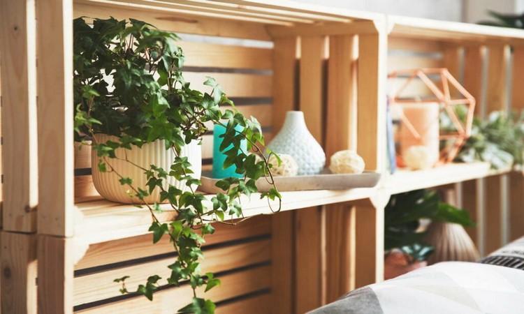 Ivy on the shelf as an air purifier