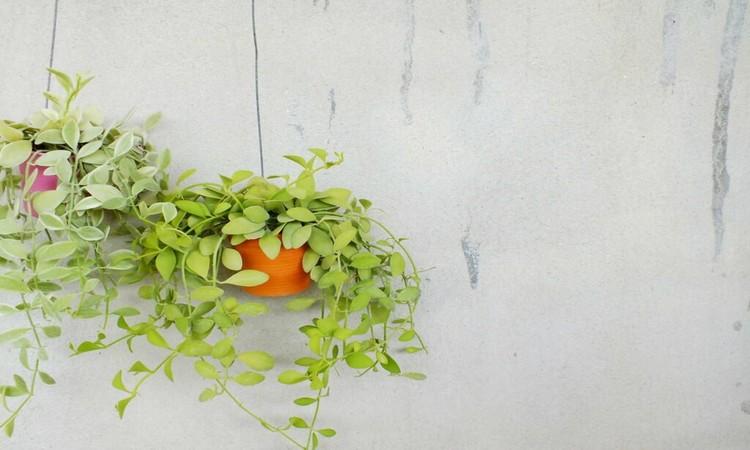 handing plant