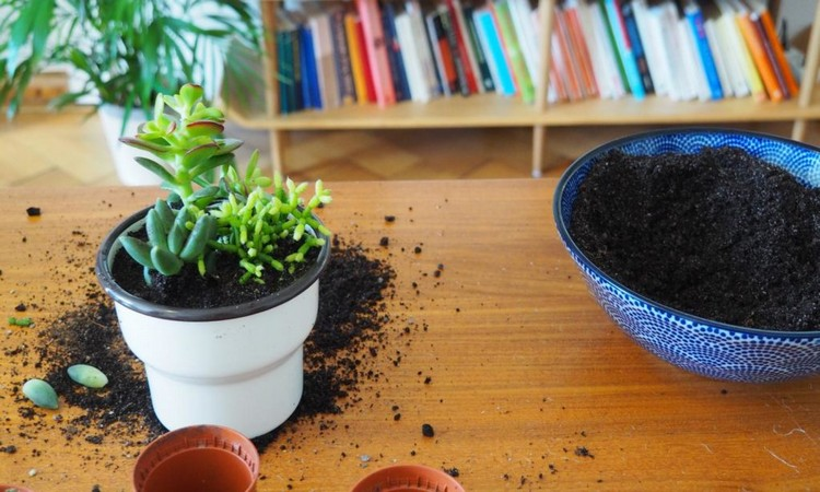 potted succulent soil
