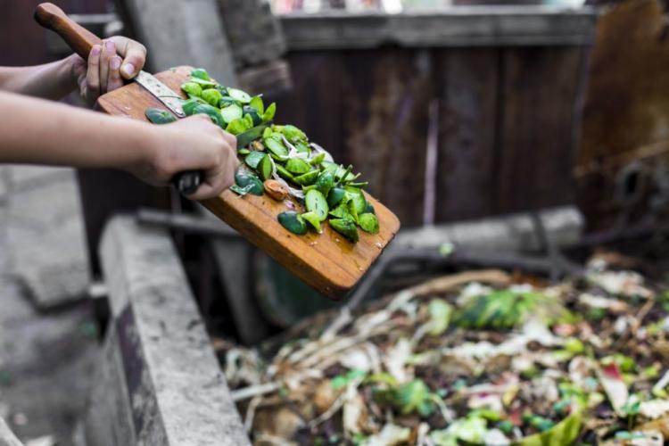 Compost is an ideal vegetable fertilizer