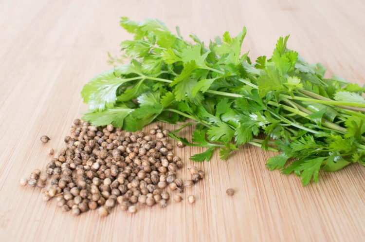 Harvesting And Storing Of The Coriander