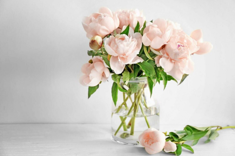 If you want to admire peonies in a vase, you have to consider a few things