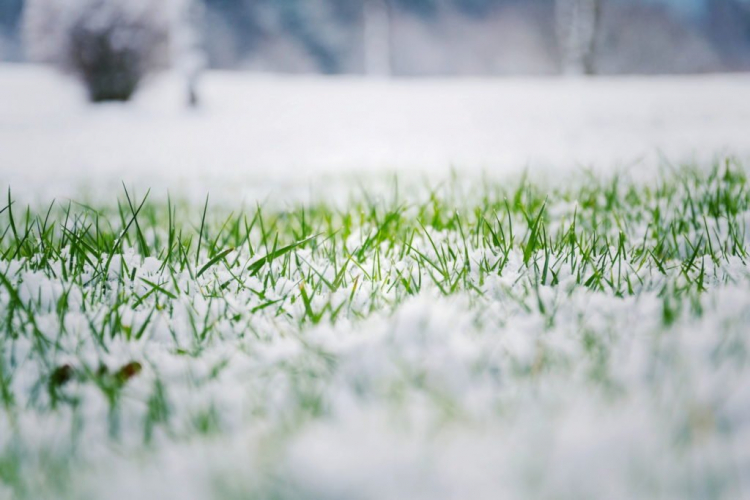 lawn to survive the winter unscathed, good autumn fertilization is necessary