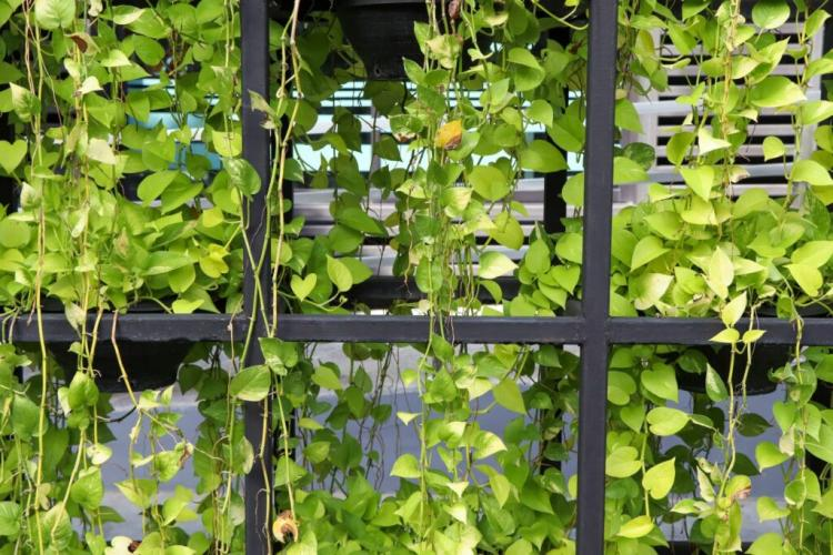 In warmer countries, floods can also be used for greening facades