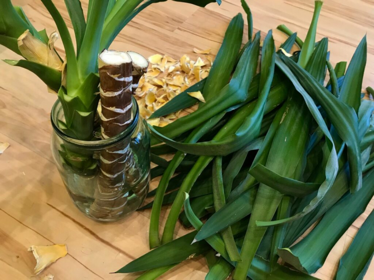 Multiple cuttings can be cut from a single yucca