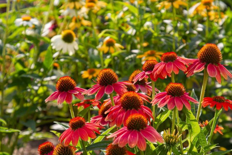 Perennials love soil with a high humus content
