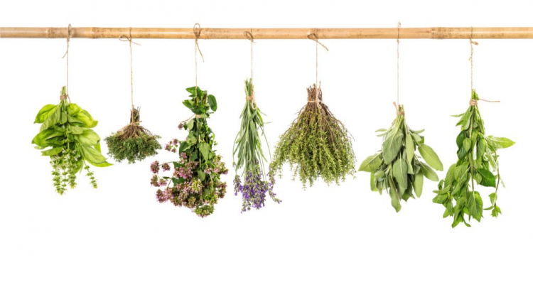 To dry, you hang basil upside down in a dark and dry place
