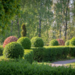 You can plant beautiful hedges with privet