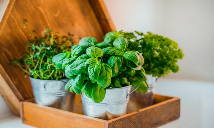 alkaline-herbs