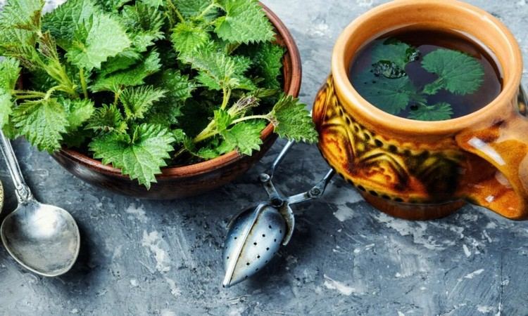 herbal tea nettle