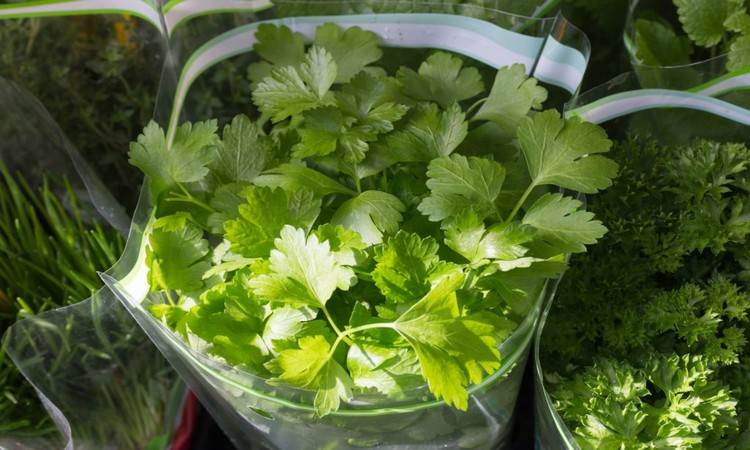 parsley-for-immune-system