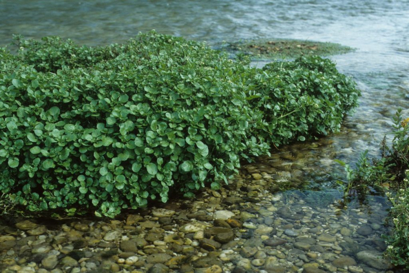 well-cress-experts-tips-for-growing-healthy-cress