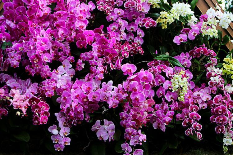 Fertilizing orchids