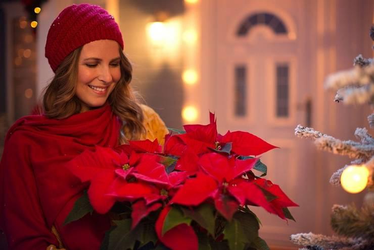 December - Poinsettia