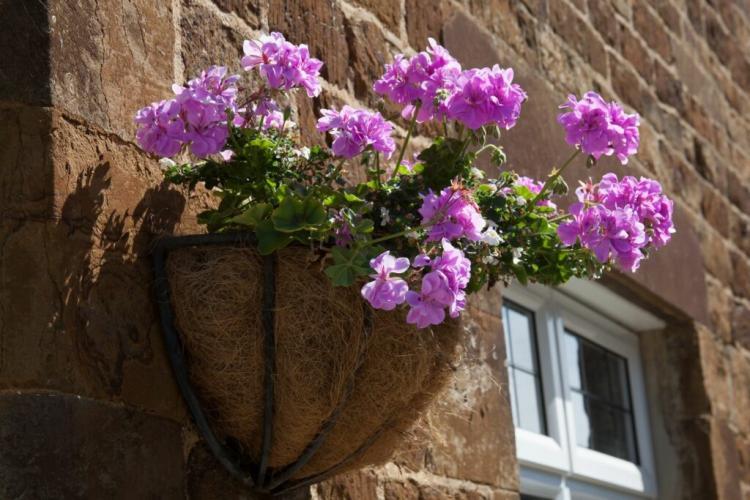 Geraniums love it sunny