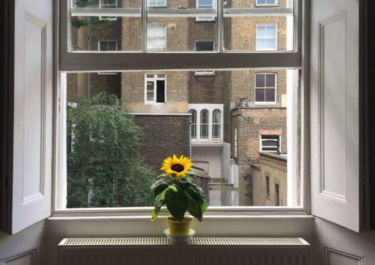 The sunflower needs a sunny location